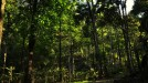 wooden cottages-Jungle Resort-Adventure in Laternstay Resort Wayanad