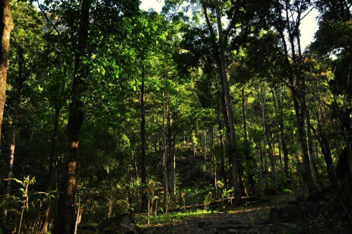Forest resort-laternstay resort wayanad