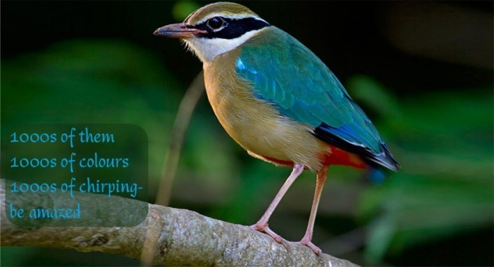 bird in Laternstay resort Wayanad