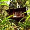 Tree house in Laternstay resort Wayanad